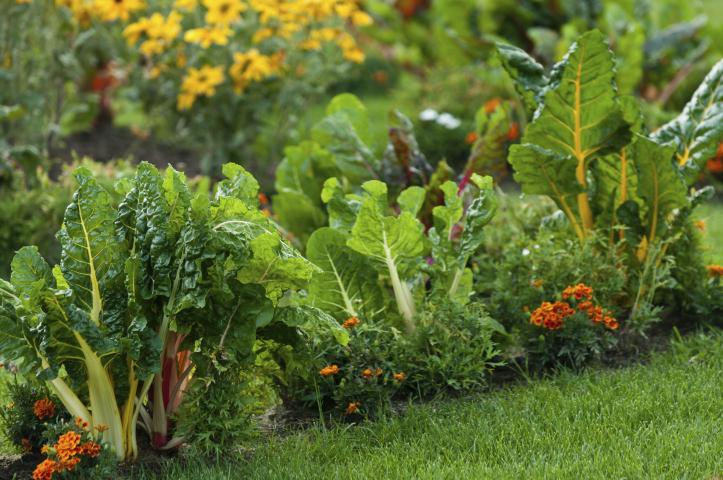 jardin_comestible