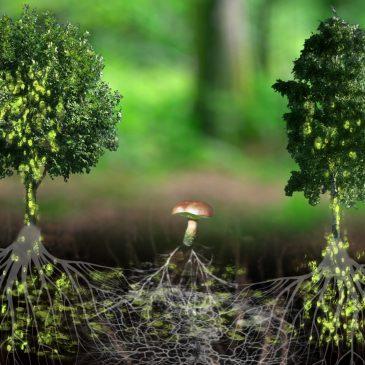 «L'intelligence des arbres» ciné débat samedi 14 avril 2018